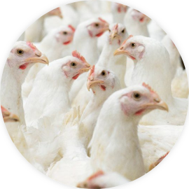 FR_CDE_IconPoultry